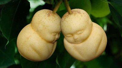 Nejdražší ovoce světa? Hranaté melouny, kulaté hrozno nebo hrušky ve tvaru Buddhy!