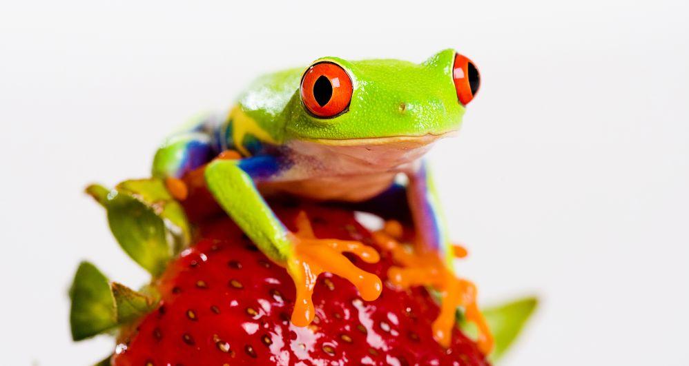 Zvířata pro štěstí - je libo brouky, prasata nebo žáby?
