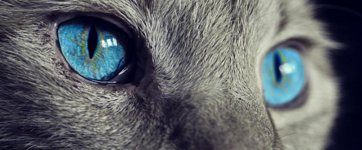 Aligátoří zuby i kočičí oko. 5 symbolů, které po světě nosí štěstí