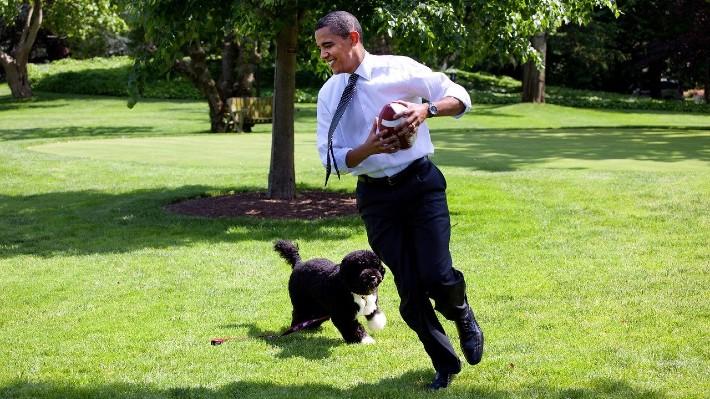 Obamův pes a šišlající Štefan. Nejslavnější mazlíčci světa vydělávají miliony (II. díl)