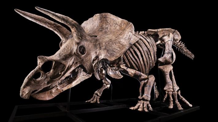 Aukce o největšího triceratopse světa brzy začne: Váš může být za 38 milionů