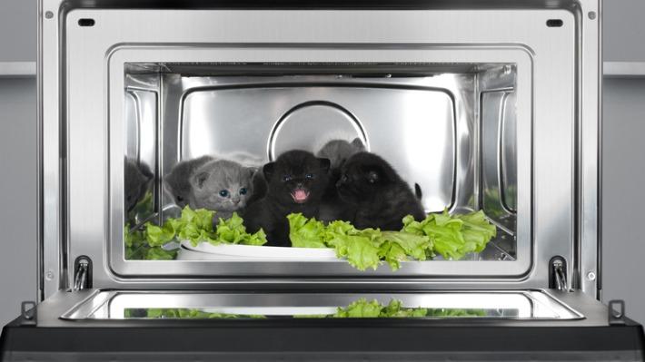 Koťátko v mikrovlnce nebo uvězněný lupič. 10 opravdu absurdních žalob (I. díl)