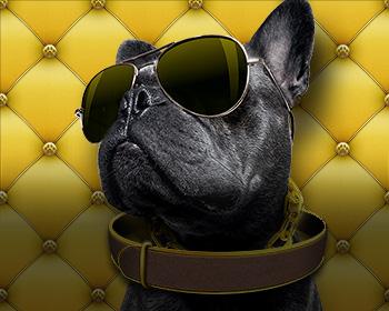 VIP mazlíček - obrázek