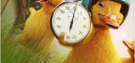 Rychlé kačky - obrázek