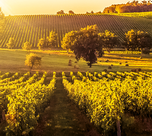 Váš vinohrad je jen 6 čísel daleko (2019)