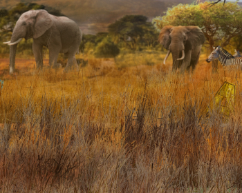 Bonus - Africké safari